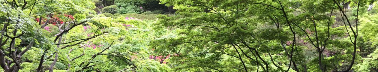 樸(あらき)俳句会 Araki-Haikukai
